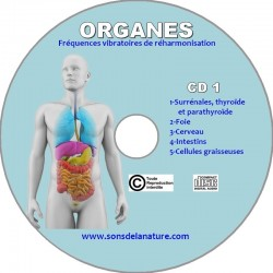 Organes CD 1
